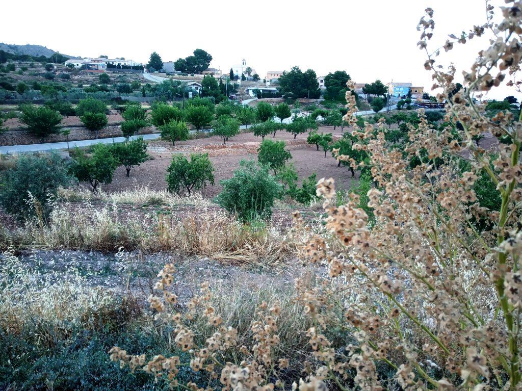 Vista de Raspay